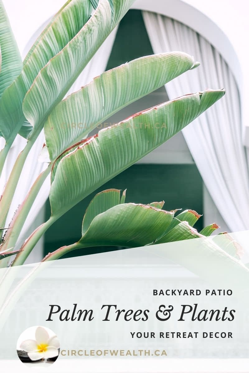 Palm trees And Plants for your Zen Backyard retreat